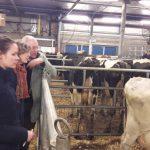 Cull-cow market in Leeuwarden