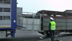 Reloading cattle