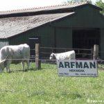 ARFMAN