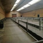 Holding area for animals at assembly centre