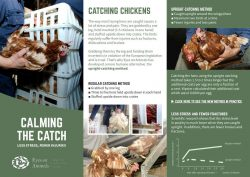 Brochure Catching Chickens calmly